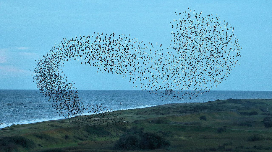 When is an atomic nucleus like a flock of birds?